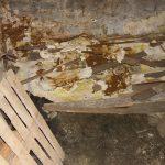 pilze_02-150x150 Holzzerstörende Pilze und Insekten